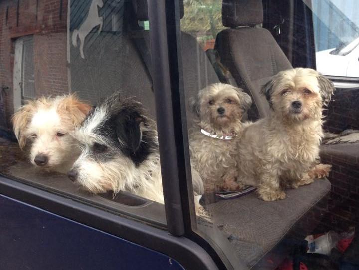 De kleine honden